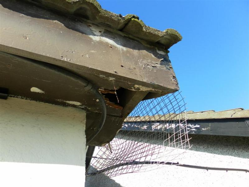 PVC-Fascia-and-Soffit-and-Gutters(100)